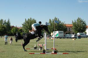 Competición de salto de caballo